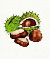 chestnuts_web