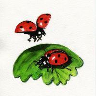 ladybirds_web